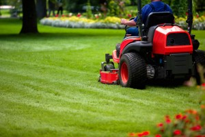 A guy in a blue shirt mowing green grass on a red lawn mower